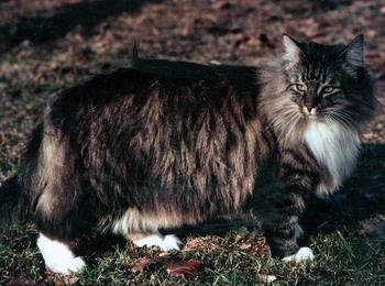 hoelang leeft een kat